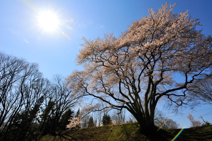 20100327_sakura201