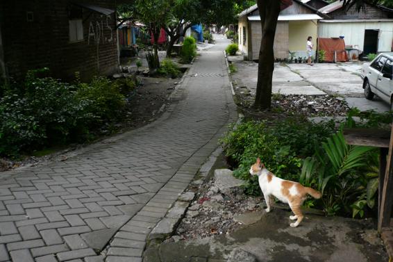 Indonesia311
