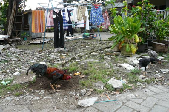 Indonesia331