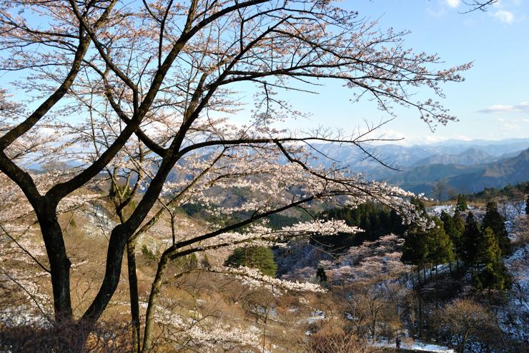 20100417_nyougi101