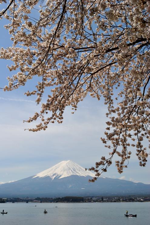 20100418_sakura41