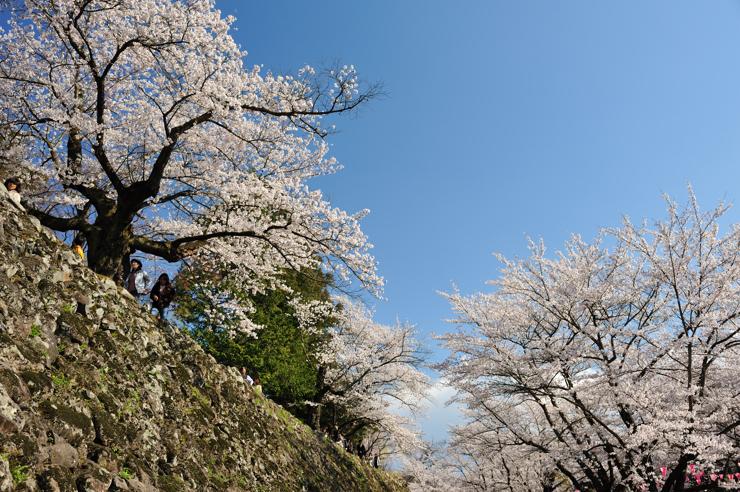 20100425_komoro1701