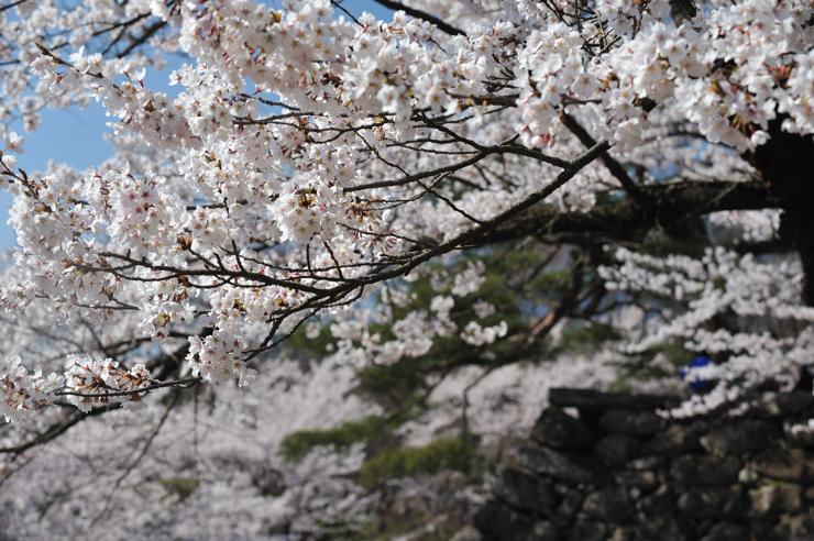 20100425_komoro191
