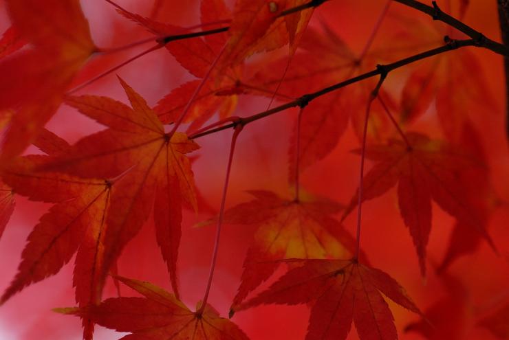 20101127_momiji01