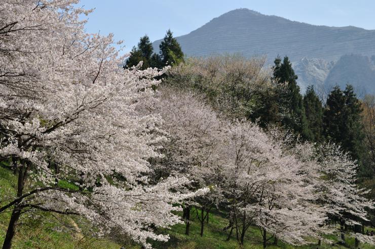 20110417_saku401