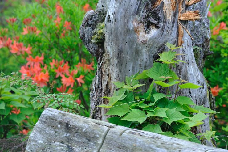 20110611_tutuji301