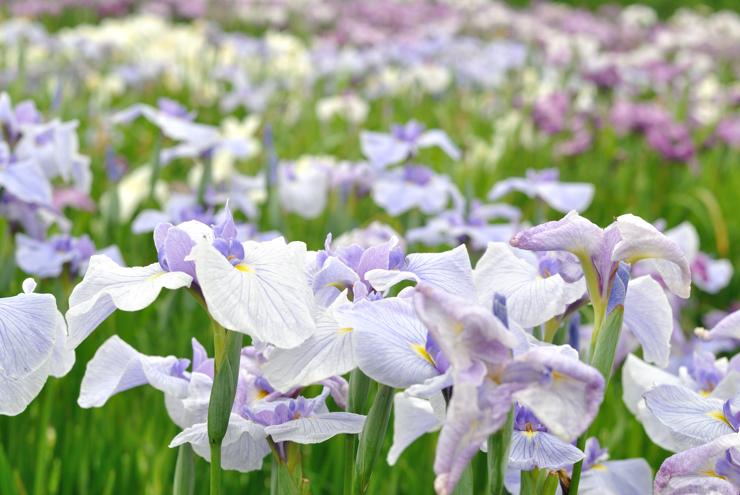 20110626_syoubu21