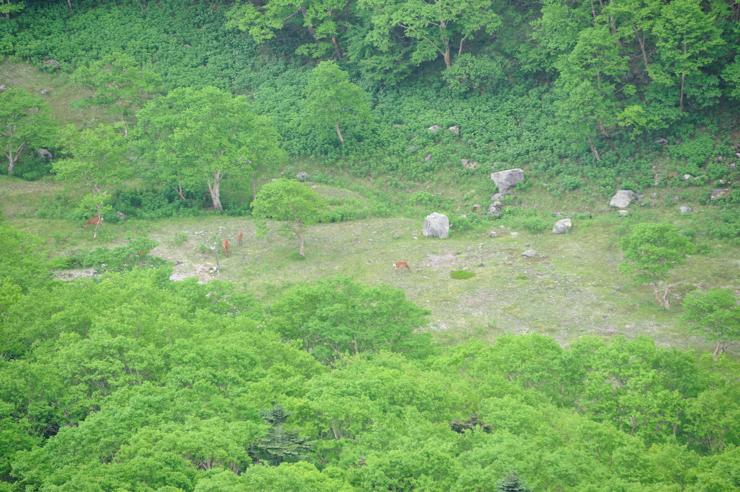 20110709_shirane61