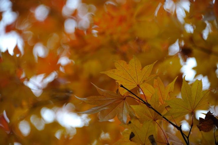 20111105_nishi3201