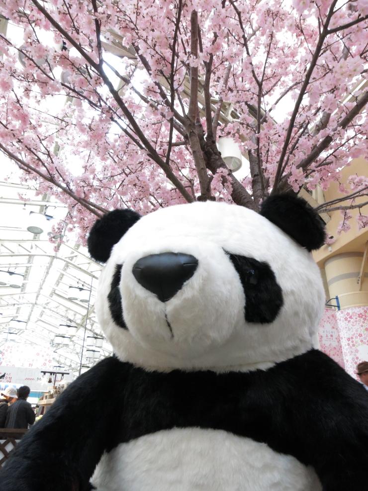 20130322_panda1