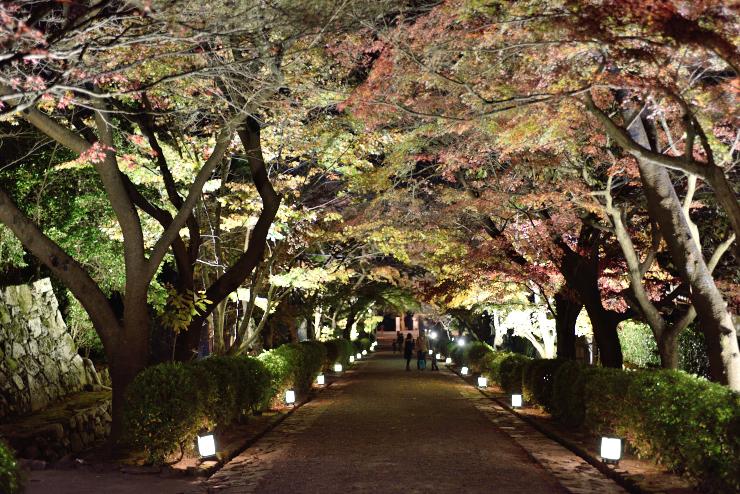 20151121_saikyouji1