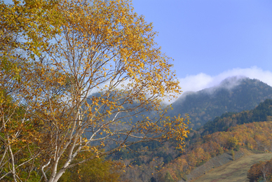 20061014_shigakogen71