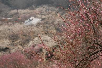 20070303_tsukuba61