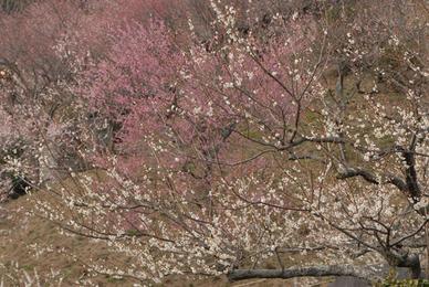 20070303_tsukuba71