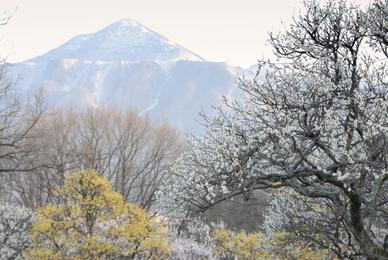 20080322_chichibu11